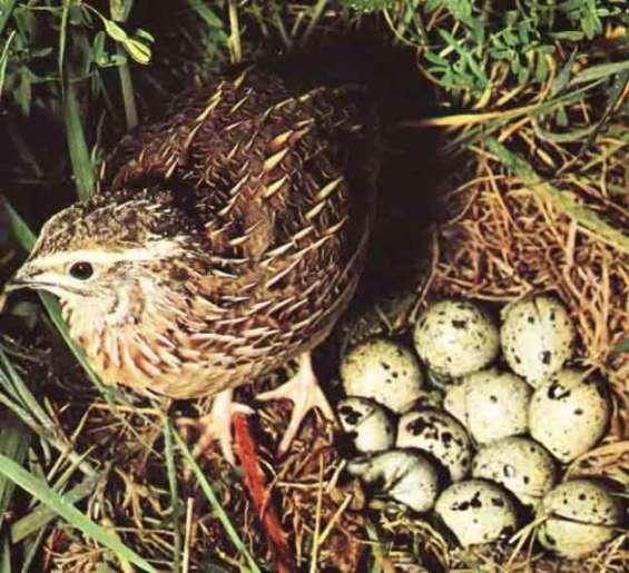 Huevos frescos y buen precio, somos productores.